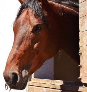 hästbox02